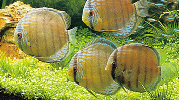 Aquariumshop