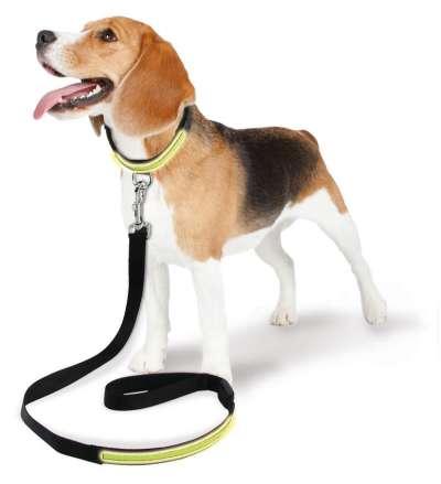Hundeleinen und -Halsbänder