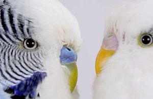 Vogelshop
