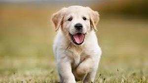 Hundeshop