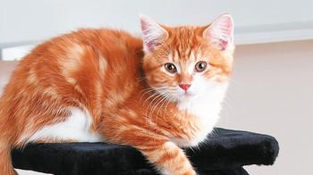 Katzenshop